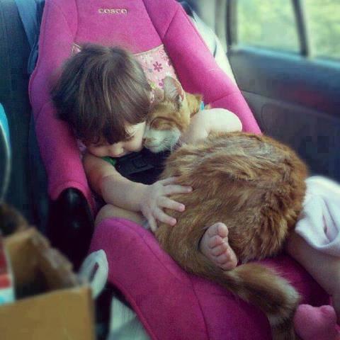 baby-hug-cat
