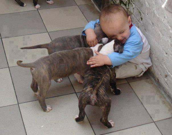 baby-hug-dogs