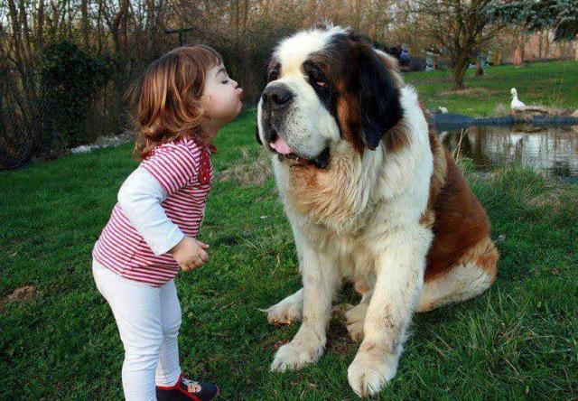 baby-kiss-dog
