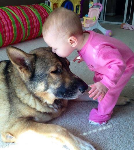 baby-kiss-dogg