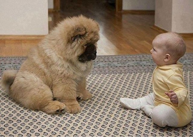 baby-playing-dog