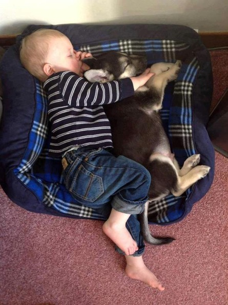 baby-sleeping-w-dog