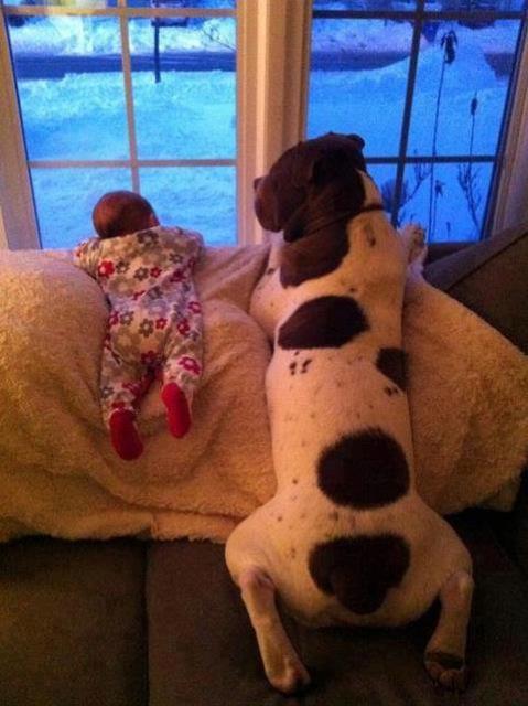 baby-snow-dog