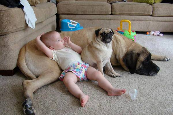 baby-watching-tv-dog