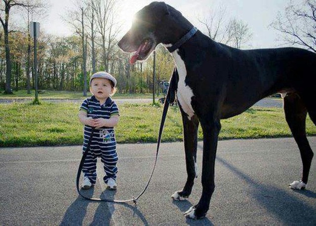 tall-dog-little-baby